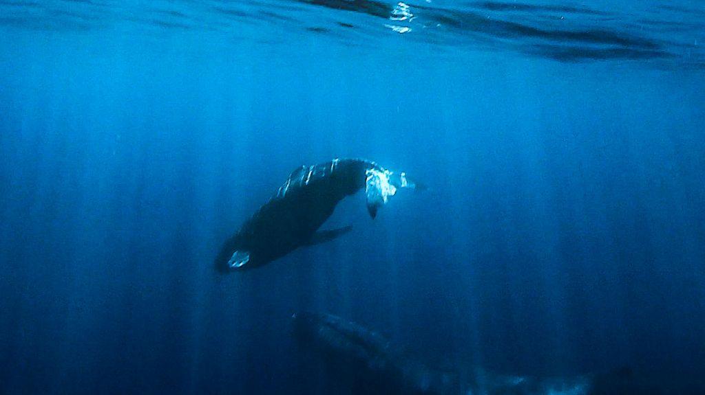 whale 2-2