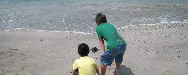 子ガメをあなたの手で海へ帰しませんか?